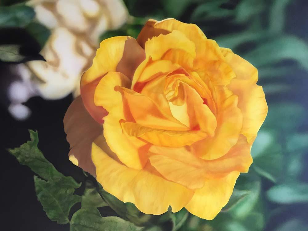 Rose Airbrush